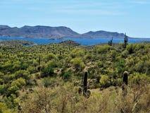 Het landschap van Arizona en kunstmatig meer stock afbeelding