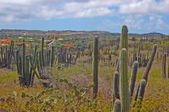 Het Landschap van Aruba Royalty-vrije Stock Afbeelding