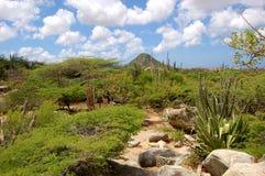 Het Landschap van Aruba Royalty-vrije Stock Fotografie