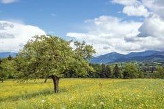Het landschap van Beieren royalty-vrije stock fotografie