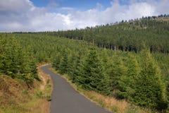 Het landschap van berg bosweg Royalty-vrije Stock Afbeeldingen