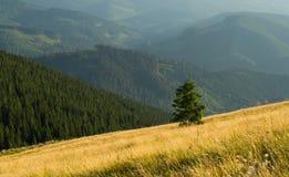 Het landschap van bergen Stock Foto