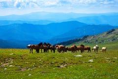 Het landschap van bergen met kudde van paarden Stock Afbeelding