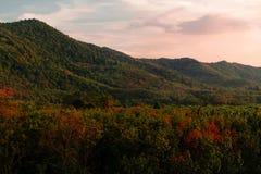 Het landschap van het bos aan de bergen en de zachte lichte zonneschijn aan de bergen in de middag, t, Koh yaoyai, Thailand royalty-vrije stock afbeelding