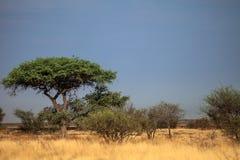 Het landschap van Botswana Royalty-vrije Stock Afbeelding