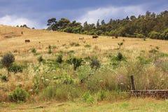 Het landschap van Calabrië Stock Foto's