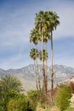 Het Landschap van Californië stock fotografie