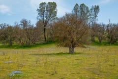Het landschap van Californië met gebied van gele bloemen stock foto's
