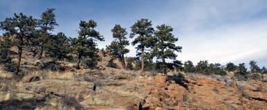 Het landschap van Colorado Stock Foto