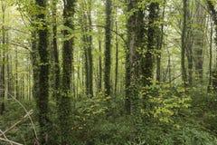 Het landschap van het dalingsgebladerte Stock Foto