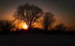 Het landschap van de avond Silhouet van bomen bij zonsondergang Stock Afbeelding