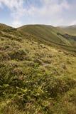 Het landschap van de Azoren in Faial-eiland Caldeira grande vulkanische kegel Stock Afbeelding