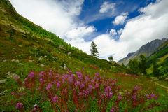 Het landschap van de berg met bloemen Royalty-vrije Stock Foto