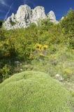 Het landschap van de berg met gele bloemen stock afbeeldingen