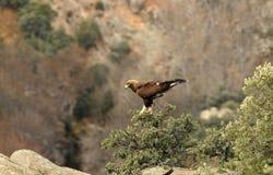 Het landschap van de berg met gouden adelaar Royalty-vrije Stock Fotografie