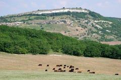 Het landschap van de berg met koeien Stock Fotografie