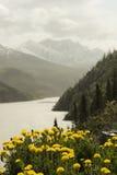 Het landschap van de berg met paardebloemen Royalty-vrije Stock Afbeelding