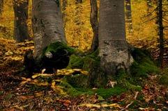 Het landschap van de bergherfst met kleurrijk bos stock afbeeldingen
