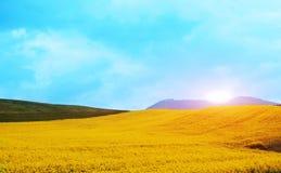 Het landschap van de berglente met gele bloemen stock foto