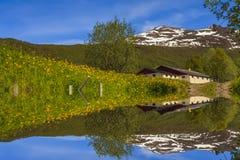 Het landschap van de bezinningslente in het water Stock Foto