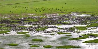 Het landschap van de Boerderij van de Shangri-La Royalty-vrije Stock Afbeeldingen