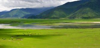 Het landschap van de Boerderij van de Shangri-La Stock Foto's