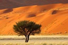 Het landschap van de boom, van het duin en van het gras royalty-vrije stock afbeelding
