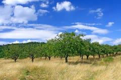 Het Landschap van de boomgaard Stock Afbeeldingen