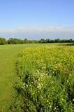 Het landschap van de boterbloemenweide royalty-vrije stock afbeeldingen