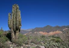 Het landschap van de cactus in Argentinië Stock Foto