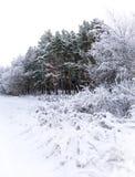 Het Landschap van de daglichtwinter met Sneeuwbos royalty-vrije stock foto