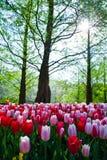 Het landschap van de de lentetuin Stock Afbeeldingen