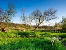 Het landschap van de de lentezonsondergang Stock Foto