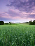 Het landschap van de de lentezonsondergang Stock Foto's