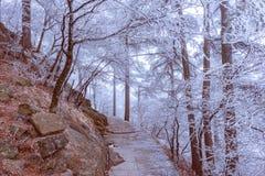 Het landschap van de de winteravond in het Nationale park van Huangshan Stock Afbeeldingen