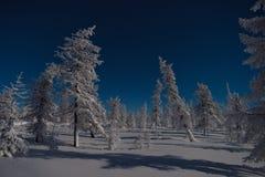 Het landschap van de de winternacht met bomen, weg en sneeuw royalty-vrije stock afbeeldingen