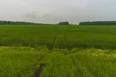 Het landschap van de de zomerdag met gebied en bewolkte hemel bloemen en weg Royalty-vrije Stock Fotografie