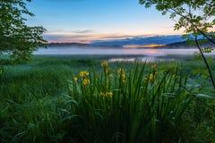 Het landschap van de de zomernacht Royalty-vrije Stock Afbeeldingen