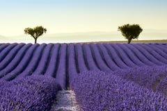 Het landschap van de de Zomerzonsondergang van het lavendelgebied Royalty-vrije Stock Afbeelding