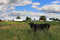 Het landschap van de dorpszomer Stock Foto's