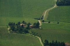 Het landschap van de druif Royalty-vrije Stock Afbeeldingen