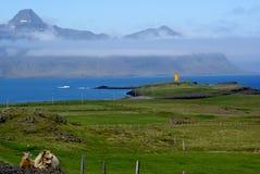 Het Landschap van de Fjorden van het oosten Stock Fotografie