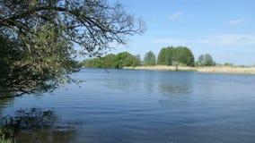 Het landschap van de Havelrivier in de Lente Wilgen op kust Havellandgebied in Duitsland stock footage