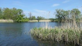 Het landschap van de Havelrivier in de Lente Wilgen op kust Havellandgebied in Duitsland stock video