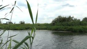 Het landschap van de Havelrivier in de zomertijd in Havelland Brandenburg Duitsland De wilgen snakken de rivier stock video
