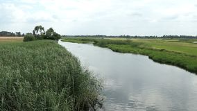 Het landschap van de Havelrivier in de zomertijd in Havelland Brandenburg Duitsland De wilgen snakken de rivier stock videobeelden