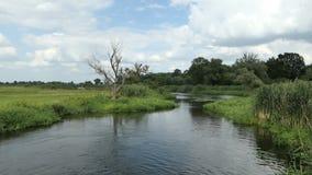 Het landschap van de Havelrivier in de zomertijd in Havelland Brandenburg Duitsland De wilgen snakken de rivier stock footage