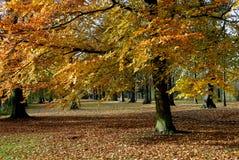 Het Landschap van de herfst. Stock Afbeeldingen