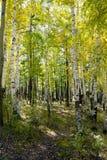 Het Landschap van de herfst Royalty-vrije Stock Foto