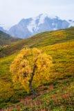 Het landschap van de herfst in de bergen Stock Afbeeldingen